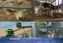Brexit : les agriculteurs britanniques sont pro-Europe