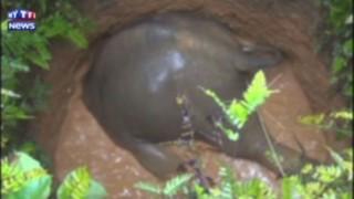 Des Indiens mettent tout en œuvre pour sauver un éléphanteau tombé dans un puits