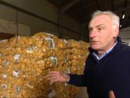 Le 13 heures du 30 janvier 2015 : Les pommes de terre n%u2019ont jamais coûté aussi peu cher - 799.824