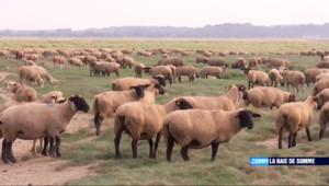 Le 13 heures du 19 octobre 2014 : Zoom sur la baie de Somme : rencontre avec un �veur d'agneaux pr�al�- 1544.3719525756837