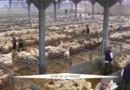 Au Royaume-Uni, les agriculteurs sont favorables au maintien dans l'UE