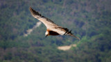 Une randonneuse dévorée par les vautours après une chute de 300 mètres