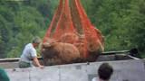 Un loup terrifie les brebis