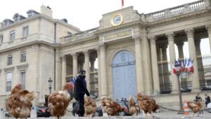 Un lâcher de poules devant l'Assemblée nationale mercredi 4 décembre