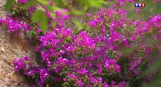 Le 13 heures du 2 juin 2015 : Bormes-les Mimosas tient son rang de village fleuri - 1687