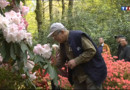 Le 13 heures du 19 mai 2013 : A la rencontre de chasseurs de rhododendrons - 1048.08
