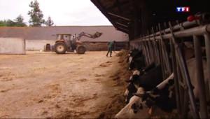 Le 20 heures du 18 juillet 2015 : Prix de la viande : la détresse des éleveurs bovins, menacés de disparition - 415
