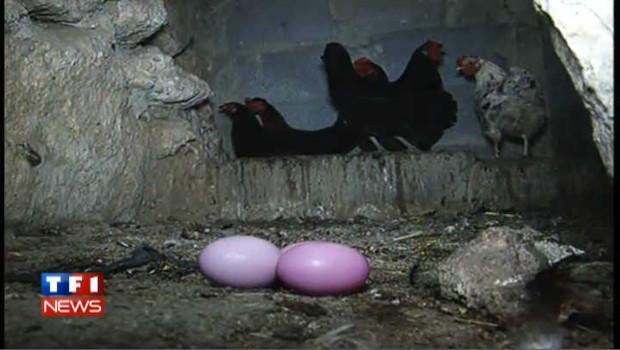 Ils ont découvert la poule aux œufs…. Roses