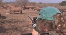 A cause du braconnage, le gouvernement sud africain a décider de déplacer en masse les rhinocéros du parc Kruger.