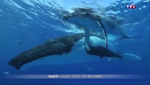 Dans les eaux de la Polynésie française, nagez avec les baleines
