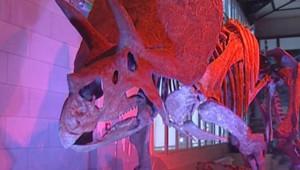 Squelette de triceratops à la Galerie des dinosaures de Bruxelles