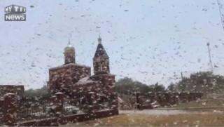 Spectaculaire invasion de criquets en Russie