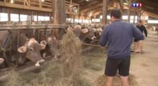 Le 13 heures du 27 août 2015 : Des producteurs de lait « fatigués » expriment leur colère - 768