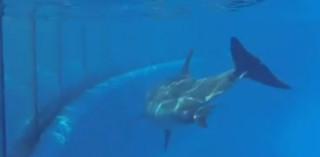 Les images de la naissance d'un dauphin dans un zoo de San Diego