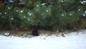 Courlon sur Yonne neige