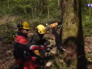 Le 13 heures du 28 avril 2015 : Le bois, une filère qui recrute - 1007.1780000000001
