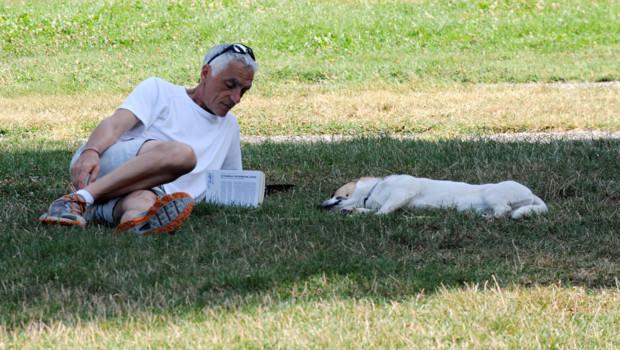 Illustration. Un homme et son chien dans un parc de Grenoble en août 2012