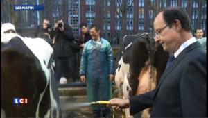Hollande participe au toilettage des vaches