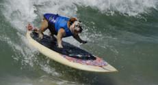 Un concours de chiens surfeurs en Californie, le 28 septembre 2014.