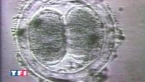 G.B. : le clonage thérapeutique autorisé