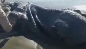 Une étrange créature découverte sur une plage d'Acapulco