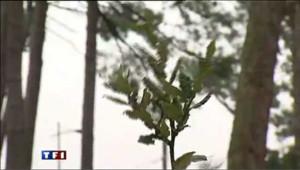 Cap Ferret : des arbres offerts pour masquer la tempête