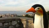 La cavale loufoque du pingouin de Céret