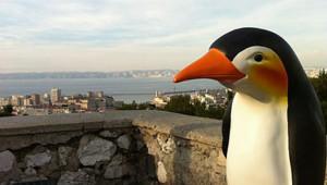 Pingu - Pingouin - Céret