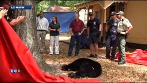 Un ours se retrouve coincé dans un arbre