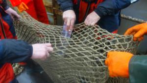 pêche pêcheurs filet poissons bateau chalutier