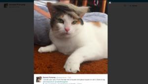 Trump your cat Donald Trump
