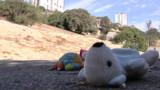 Marseille : évacuation des Roms déjà chassés jeudi par des habitants