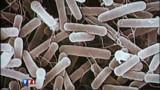 Cette bactérie tueuse qui inquiète l'Allemagne