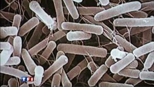 Colonie de bactéries