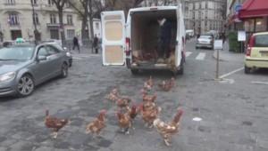 Lâcher de poules à l'Assemblée nationale le 4 décembre 2013