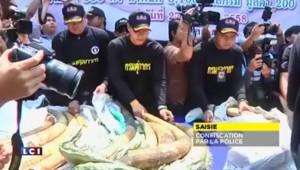 En Thaïlande et en Afrique, les éléphants toujours chassés pour leur ivoire