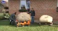Voici Karolina, 598 kg, la plus grosse citrouille de Pologne