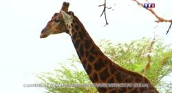 Au Sénégal, les animaux sauvages menacée par le réchauffement climatique