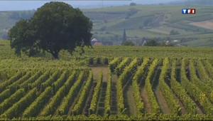Le 13 heures du 2 septembre 2013 : Villages viticoles : de Marlenheim �hann en Alsace (1/5) - 2064.769