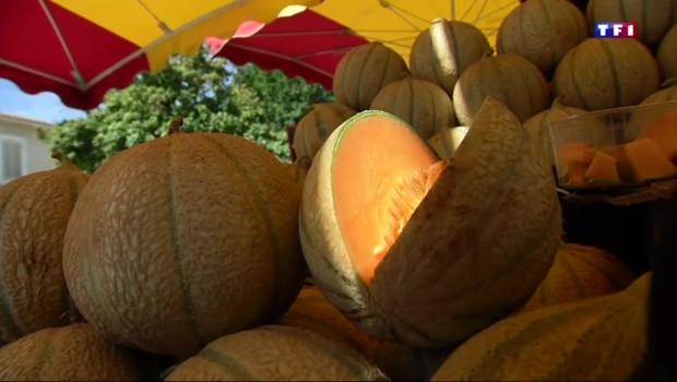 Le melon du Cavaillon, une fierté pleine de saveurs pour les Vauclusiens
