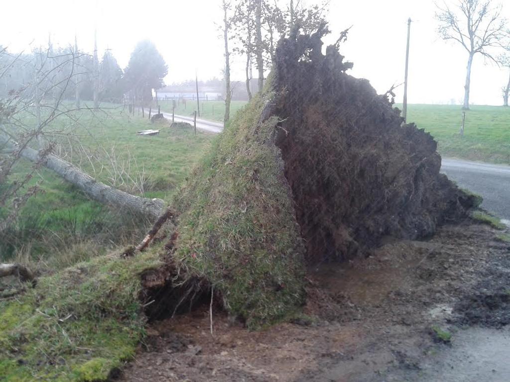 Photo envoyée par une internaute : arbré tombé à Annebecq dans le Calvados à cause de la tempête Qumeira.