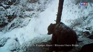 L'ours Balou est mort à l'âge de 11 ans.