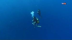 Plongée dans les eaux limpides du lagon de Mayotte