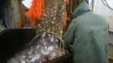 FAO : la planète consomme trop de poissons