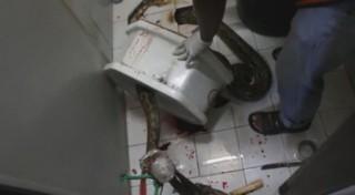 Aux toilettes, il se fait mordre le pénis par un python de 3 mètres