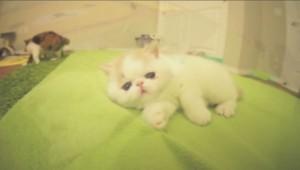 Le chaton Bun Bun est une star sur internet.
