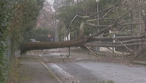 Un arbre arraché par la tempête