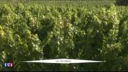 Hérault : les viticulteurs en colère face aux importations croissantes de vins espagnols