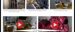 Les méthodes choc de L214 pour dénoncer les conditions d'abattage