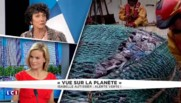Depuis lundi, la France vit à crédit sur sa consommation annuelle de poisson